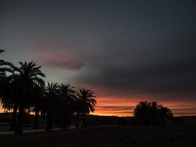 Sunset at Izway Wines - Seppeltsfield Road, Barossa