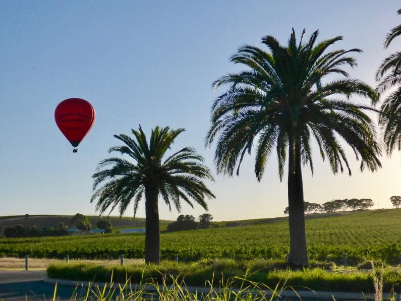 Barossa Valley Ballooning - Seppeltsfield Road