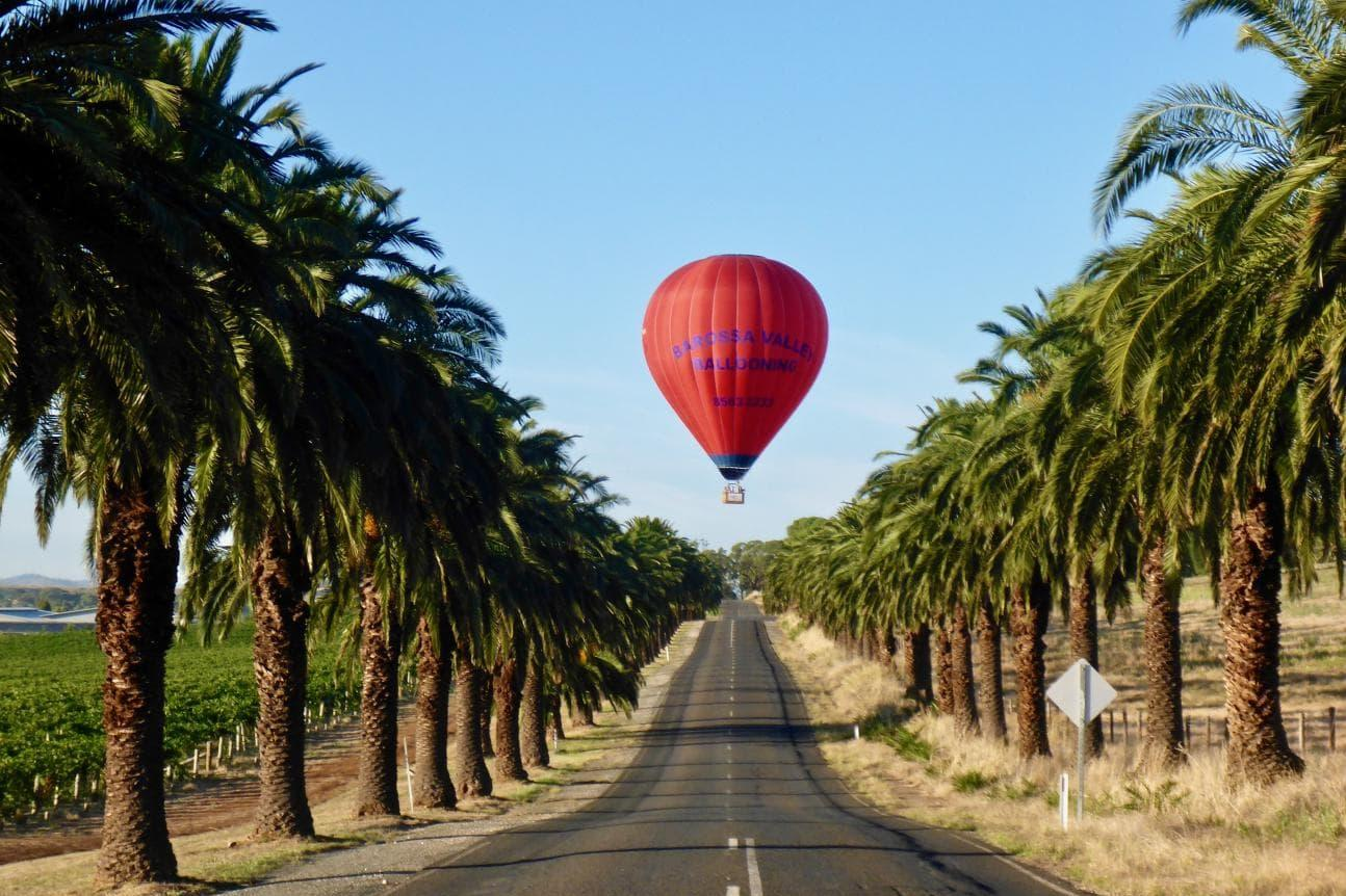 Discover Seppeltsfield Road In The Beautiful Barossa Valley